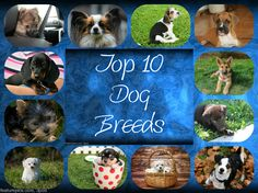 Photo's Courtesy Pixabay      Dog are the most loved pets to have not just in America but all-around the world. Their adorable nature ...