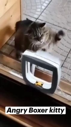 Funny Animal Jokes, Funny Cute Cats, Funny Cat Memes, Cute Funny Animals, Hilarious, Cute Little Kittens, Cute Baby Dogs, Cute Wild Animals, Cute Little Animals