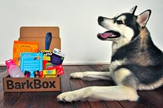Bark Box ((You tell them your dog's size and pick a plan, and every month toys and treats custom for your dog are delivered to your door))