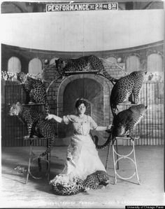 Lady and leopards Bostock's trained animals, Old Circus, Dark Circus, Circus Art, Circus Theme, Circus Train, Vintage Circus Photos, Vintage Photographs, Vintage Circus Performers, Old Pictures