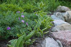 Kivillä reunustettu kukkapenkki