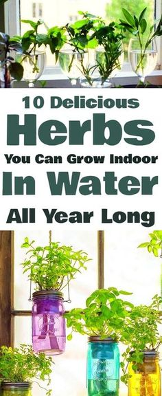 Make Your Own Indoor Herb Garden With These Tasty Herbs You Can Grow Indoor In Water Right Through The Year. Make Your Own Indoor Herb Garden With These Tasty Herbs You Can Grow Indoor In Water Right Through The Year. Hydroponic Gardening, Hydroponics, Container Gardening, Organic Gardening, Gardening Tips, Indoor Gardening, Herb Garden Indoor, Gardening Gloves, Potted Herb Gardens