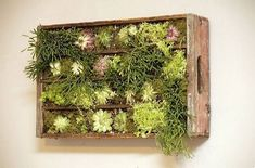 Turning an old wooden crate into a gorgeous living wall