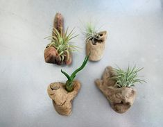 Driftwood Air flow Flower Magnets Group of 4 Organic and natural Home Decor Etsy Natural Interior, Natural Home Decor, Hardy Plants, Air Plants, Oxygen Plant, Driftwood Crafts, Driftwood Planters, Driftwood Ideas, Driftwood Sculpture