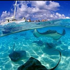 Swim with the rays in the Caymens... some of the most beautiful water I've ever seen!