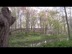 Tree By The Pond (Natural sounds)