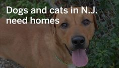 N.J. pets in need: Oct. 31, 2016