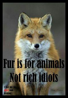 Don't be an idiot...