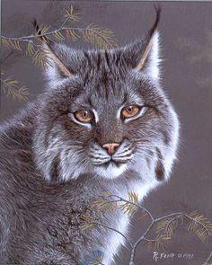 Lynx Paintings | fehr_lynx_kitten2 – fehr_lynx_kitten2