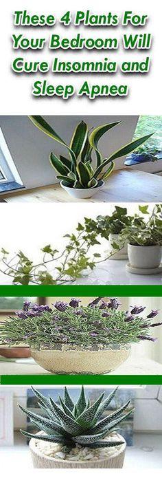 How To Overcome Sleep Apnea Naturally With These 4 Plants
