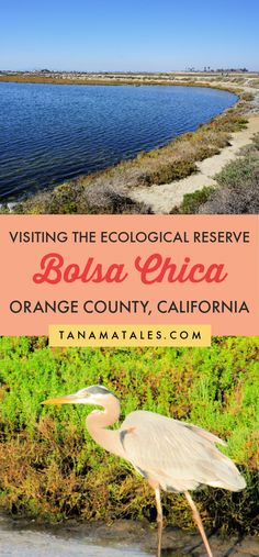 Complete guide to visit the Bolsa Chica Ecological Reserve | California | Things to do in Huntington Beach | Things to do in Orange County | Things to do in Seal Beach | Things to do near Anaheim | Bolsa Chica State Beach | Orange County Beaches | Orange County Hikes | Southern California Hikes | Orange County Aesthetic | Orange County Photo Locations | Orange County Bucket List | Pacific Coast Highway Road Trip | Southern California Road Trip | Huntington Beach Hikes | Near Disneyland