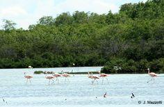 Áreas Naturales Protegidas en Tumbes y Piura