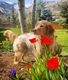Spring in Colorado! #cute #dogs #dog #aww #puppy #adorable