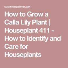 How to Grow a Calla Lily Plant   | Houseplant 411 - How to Identify and Care for Houseplants