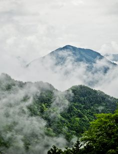 Just came back from a wonderful vacation to the Great Smokies!!