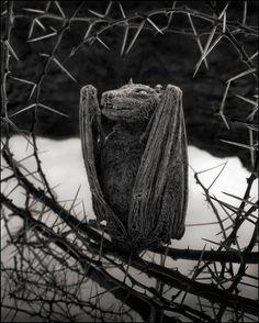 Lake Natron's Secret: Sensational Photos of Mummified Animals! |
