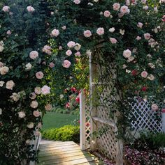 Let climbing roses, well, climb up an archway for a thoroughly romantic garden entrance.