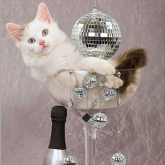 happy mew year source source source source source funny cats cute cats