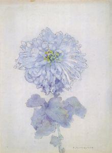 Mondrain- Chrysanthemum Watercolour on paper, 28.5x20.5 cm