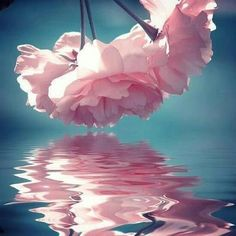 This would make a cool watercolor picture  or idea!  #flowers, #water, #reflection