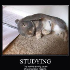 Awwwww #cute #bunny