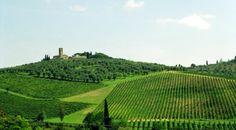 Pratica+mappa+dei+vini+italiani+regione+per+regione