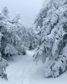 always the snow that's untouched and fluffed out , is the BEST ! Winter Snow Wallpaper, Christmas Wallpaper, Winter Family Pictures, Snow Photography, Winter Nature Photography, Snow Gif, Winter Szenen, Snow Wedding, Snow