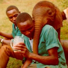 Baby Elephant: Open our hearts to these wondrous, intelligent, social and extremely emotional fellow animals.