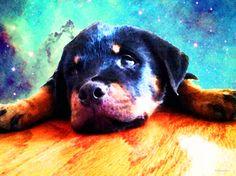 art, sharon cummings, love, god, Artist, paintings, artwork, prints, dogs, dog, animals, heaven, bird, birds, pets, death, dying, cat, cats, rainbow bridge, eternal love, rottweiler, rottweilers, rottweiler puppy, rottweiler puppies, rottie, rotties, rotty