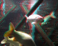 Artis zoo in Amsterdam 3D photo analgyph | Flickr - Photo Sharing!