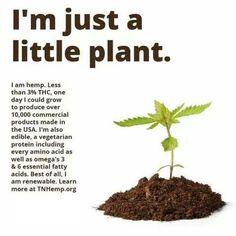 I'm just a little plant... Cannabis  TNHemp.org