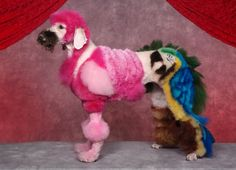 Who's a pretty boy then? A dog with animal designs at a creative grooming competition in Seacaucus, New Jersey.