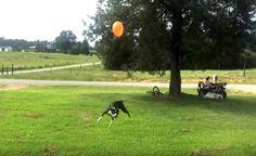 The balloon is life, and we are all the dog. Best Dogs, Laughter, Balloons, Take That, Fun, Priorities, Watch, Life, Globes