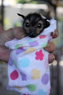 Cute Pet Baby Flying Fox Bat