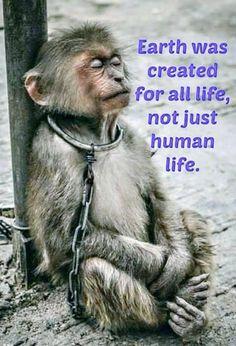 """""""La tierra fue creada para toda vida, no sólo para la vida humana"""" ...Cada uno en su habitat merece respeto."""