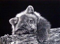 "scratchboard art | Judy White's awesome scratchboard of my photo ""Rainy Day Grizzly Cub ..."