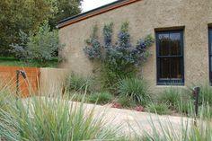 Carmel Valley House - traditional - landscape - other metro - Joni L. Janecki & Associates, Inc.