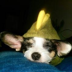 Slapende Igor