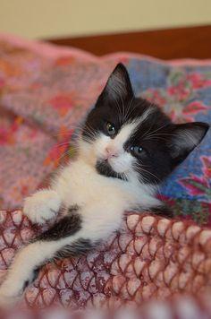 Cat, Catty & Kitty