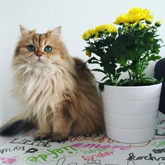 Smoothie is One Stunningly Handsome and Photogenic Cat