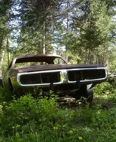 Old Dodge Charger in the woods