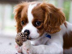 เอาใจคนรักมะหมาแสนน่ารัก ด้วยลูกสุนัขสุดน่ารักน่าเลี้ยง ♥ รูปที่ 19