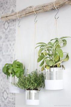 On libère les tables et on utilise les murs pour mettre en valeurs nos herbes aromatiques.