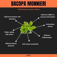 Bacopa Monnieri (known also as Brahmi) is one of the essential ingredients in our STAQ Performer nootropic stack. Bacopa is an adaptogenic herb which means it increases our body's resistance to stress. Research shows that Bacopa improves our memory, attention and the ability to process information, which can result in improved learning rates. Moreover, some studies show that Bacopa can help reduce ADHD symptoms. Rhodiola Rosea, Flow State, Adhd Symptoms, Coping With Stress, Lemon Balm, Reduce Inflammation, Our Body, The Balm, Benefit