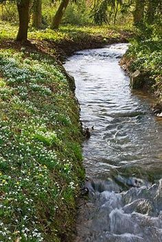 Would love to have the stream this well kept.