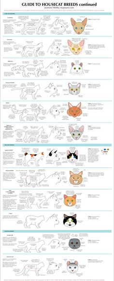My guide to Housecats Breeds is now available as a poster in two parts: Click here for Part 1 and Part 2. I also have... MUGS! The full series (get the book!): Guide to Pantherinae/Big cats Guide t...
