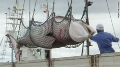 Japan's whaling fleet has returned with more than 300 whales harvested from Antarctic waters, according to the country's Fisheries Agency.