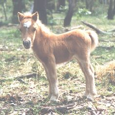 Mini Horse  Ok I want one or two....they're small.