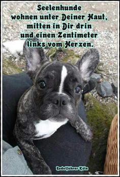 #Seelenhunde #Hund #Hunde
