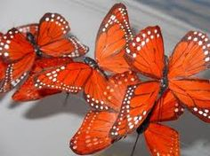 orange things - Google Search   ...........click here to find out more     http://googydog.com